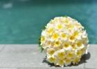 フォーシーズンズ・サヤン挙式生花のブーケ&ブートニア ホワイトプルメリア&ホワイトローズ