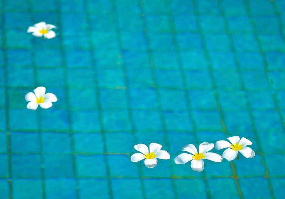 プライベートプールに浮かぶプルメリア