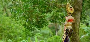 民族衣装レンタル遠方料金<br>(南部リゾート以外、ウブド・チャンディダサ・チャングー等)