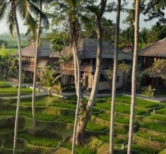 Rice-Paddies-View