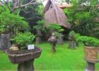 クラトン・ジンバラン・ビーチ・リゾート ホテル敷地内のガーデン